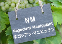 シャンパーニュ 生産者タイプ別 NM