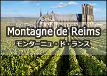 シャンパン モンターニュ・ド・ランス 小